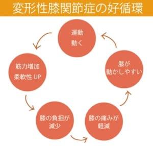 運動療法による好循環