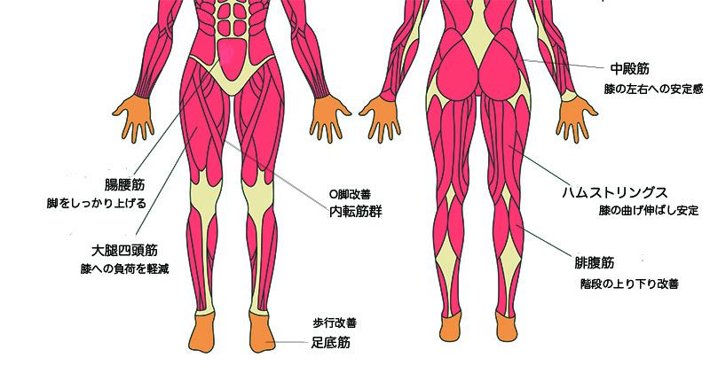 それぞれの筋肉の役割