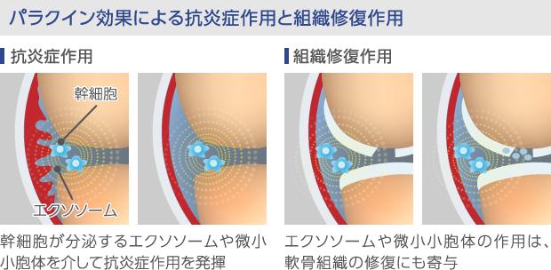 幹細胞のパラクイン効果